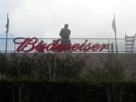 Budweiser Channel Letters at The Ballpark in Arlington, TX